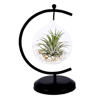AUTOARK Glass Vase Plant Terrarium with Black Metal Stand,Ornament Display Stand,Office Desktop Potted Stand,Home & Office Decor Accent,1 Globe,APT-001