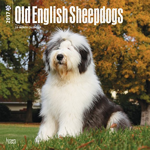 Old English Sheepdogs - 2017 Calendar 12 x 12in