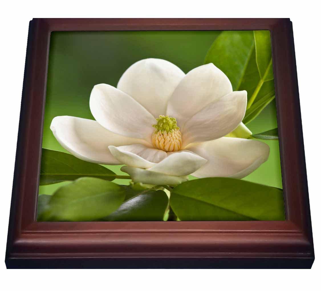 3dRose trv_83297_1 Magnolia Tree Flower Blossom Trivet with Tile, 8'' x 8''