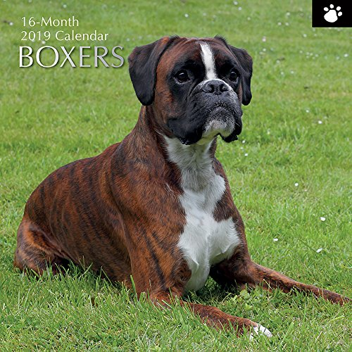 (2019 Wall Calendar - Boxer Calendar, 12 x 12 Inch Monthly View, 16-Month, Dogs and Pets Theme, Includes 180 Reminder)