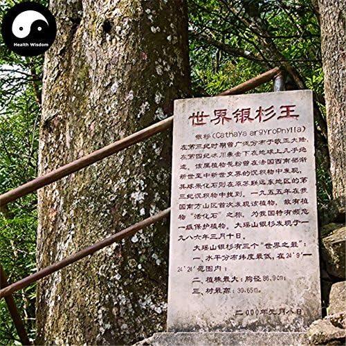 Swansgreen Buy Rare Cathaya Argyrophylla Tree Seeds 160Pcs Plant Chinese Cathaya Argyrophylla Tree Grow Yin Shan