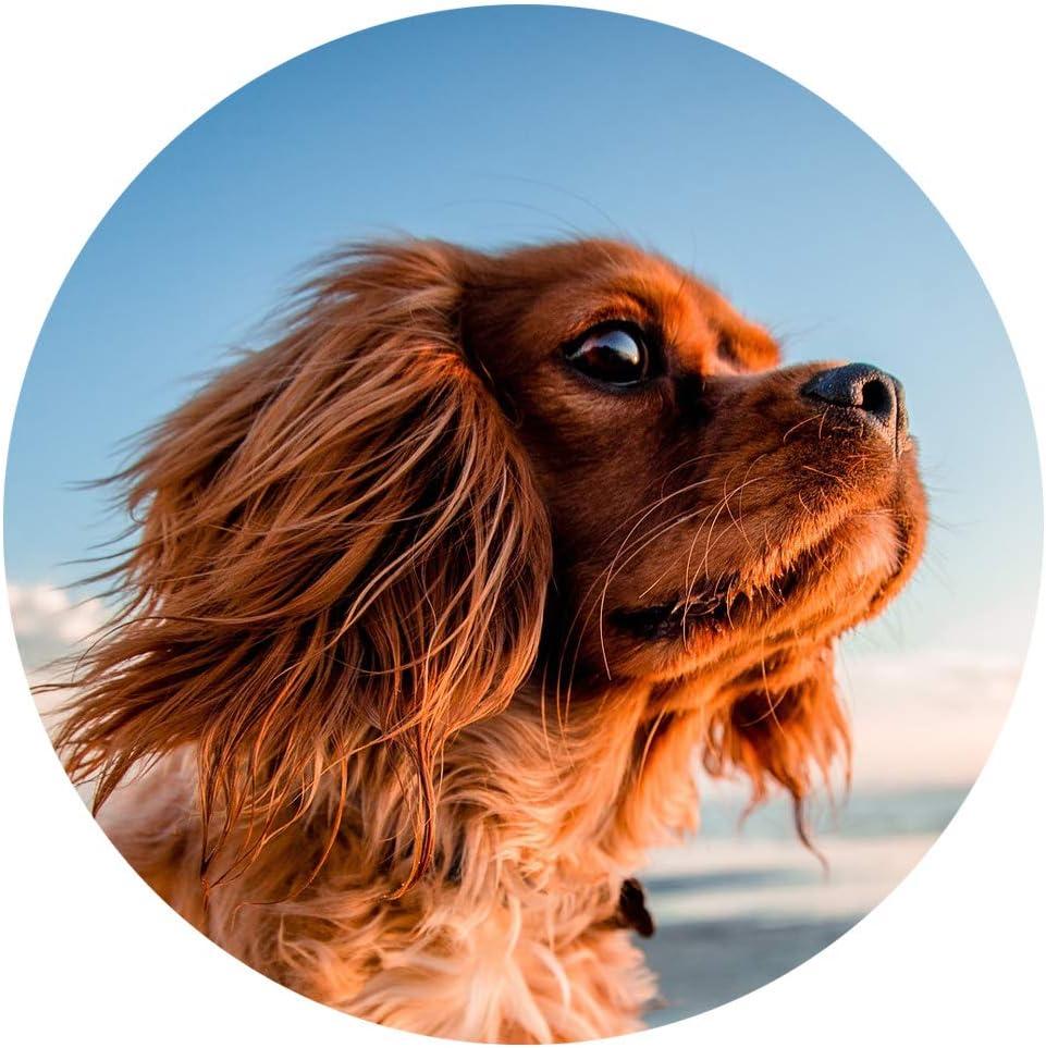 Dog FIT de PreThis® IMMUN Calostrum para Perros   Apoya el Sistema inmunológico   Fortalecimiento para Perros jóvenes y Viejos   100% Naturaleza