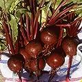 Everwilde Farms - Detroit Dark Red Beet Seeds - Gold Vault