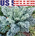 200 seeds ORGANICALLY GROWN Kale Dwarf Blue Curled Vates Seeds Heirloom NON-GMO