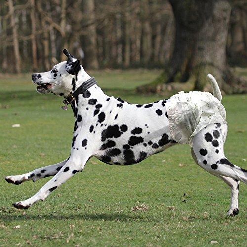 Vets Best Comfort Fit - Pañales desechables para perro con indicador de humedad: Amazon.es: Productos para mascotas