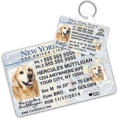 NEW Custom Yes I Need All These Dogs Personalized Aluminium Sign
