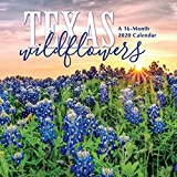 Texas Wildflowers 2020 Wall Calendar