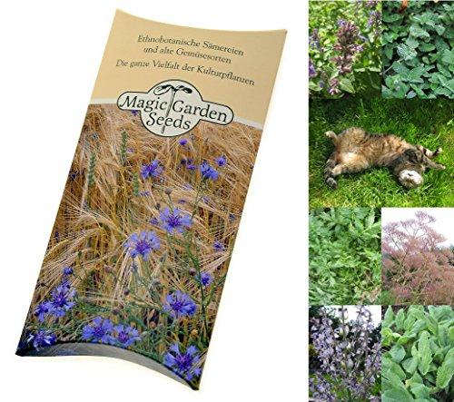 Saatgut Set: 'Katzenkräuter', 3 Pflanzen die von Katzen geliebt werden als Samen in schöner Geschenk-Verpackung
