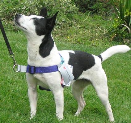 Walk Your Dog With Love arnés del perro Cuerda en frente del ...