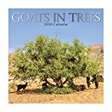 2018 Goats in Trees Calendar - 12 x 12 Wall Calendar - With 210 Calendar Stickers