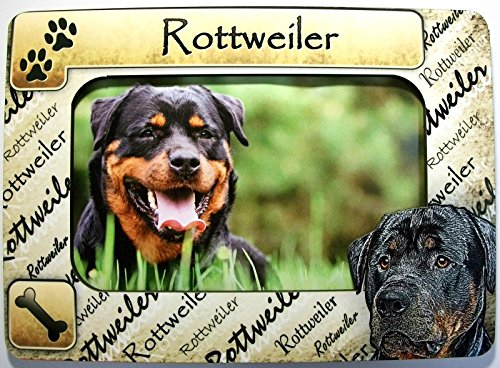 rottweiler pictures - 6
