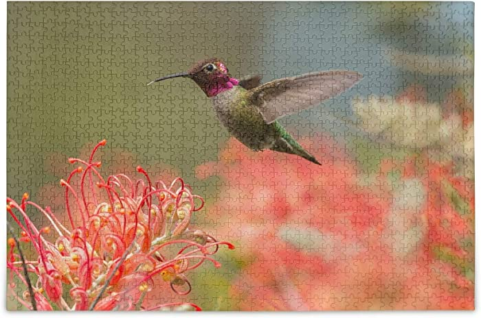 Qilmy 500 Piece Jigsaw Puzzles DIY Adult Kids Male Hummingbird Flying Around Grevillea Flowers Puzzles, Hand Made Puzzles Personalized Gift, Fun Intellectual Decompressing Educational Games, Home Deco