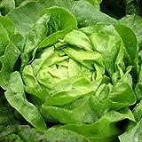 Vegetable Plants & Seeds