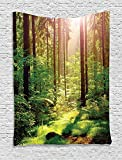 Farm House Decor Tapestry, Forest Spring Time Sunset Moss Woods Leaf Wilderness Fantasy Magical View, Bedroom Living Room Dorm Decor, 40 W x 60 L Inches, Green Brown