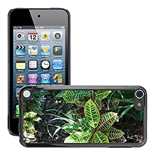 Hot Style Cell Phone PC Hard Case Cover // M00307927 Foliage Plant Nature Green Sun // Apple ipod Touch 5 5G 5th