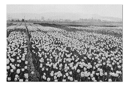 llingham Tulip Fields Photograph (20x30 Premium 1000 Piece Jigsaw Puzzle, Made in USA!) ()