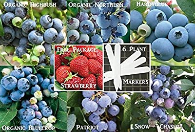 Bulk 6 Blueberry Seeds Survival Seeds 700 Seeds Upc 646263360781 + 6 Plant Markers