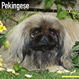 Pekingese Calendar - Dog Breed Calendars - 2017 - 2018 wall Calendars - 16 Month by Avonside