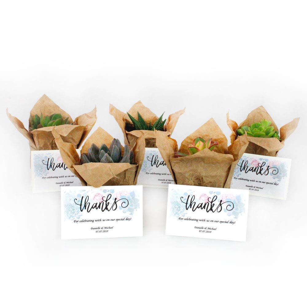 NW Wholesaler - Bulk Succulents with Craft Paper, Burlap String, and Personal Cards for Wedding or Party Favors (50)
