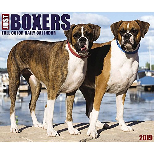 Just Boxers 2019 Box Calendar (Dog Breed Calendar)