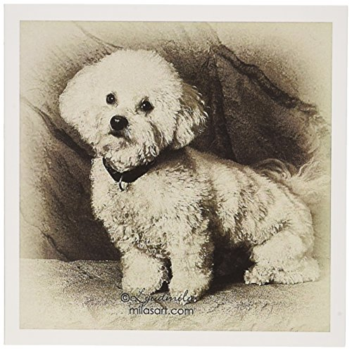 Bichon Frise Greeting Card - 3dRose Bichon Frise - Greeting Cards, 6 x 6 inches, set of 12 (gc_4625_2)