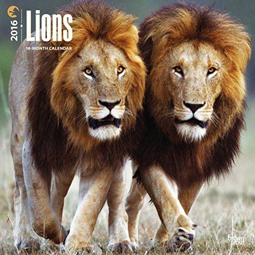 Lions - 2016 Calendar 12 x 12in