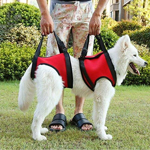 BABYS'q Dog Support & Rehabilitation Harness, Aid Canines to Stand Up, Climb Stairs, Help for Disabled, Injured, Elderly Dogs 2 Pieces,Red,M