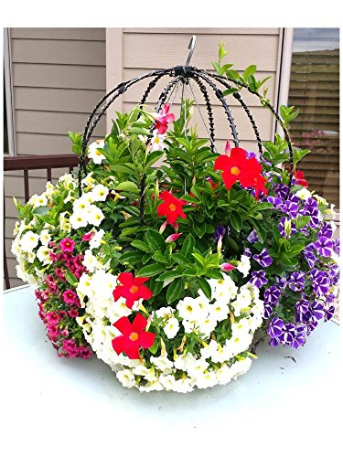 You'll love this Basket Booster Topiary Frame for climbing vines, fairy garden accessory,Solar Lights! Light up your next garden party. Kit will make 1 lighted Topiary with solar lights.