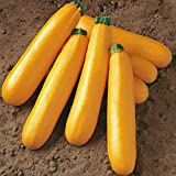 "A 2g (Approx. 14) Golden Zucchini Seeds ""Goldena"" Productive, Nicely Colored Dietary Vegetable"
