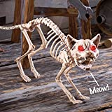 Collections Etc Scary Sound-Activated Skeleton Cat Halloween Decoration