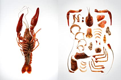 Amazon Anatomy Of A Lobster Dissection Photo Art Print Poster