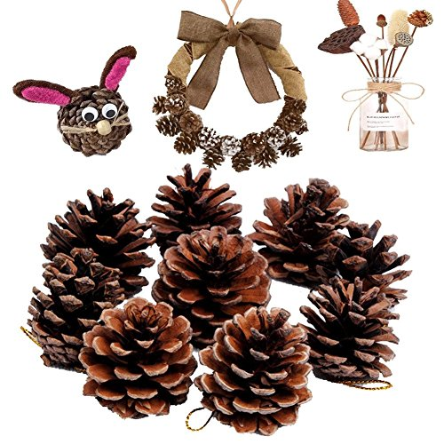 (Natural Pine Cones, Lodge Pole Decorative Fall Winter Holiday Home Decor Vase Filler, 18 PCS)