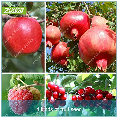 Seed 4 Kind Fruit Bonsai Fruit Tree Vegetable and Fruit Delicious Cherry Pomegranate Raspberry ap.ple Total 100+pcs