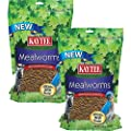 Kaytee Mealworms from Kaytee