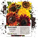 "Package of 250 Seeds, Sunflower ""Crazy Mixture"" (15+ Varieties) Open Pollinated Seeds by Seed Needs"