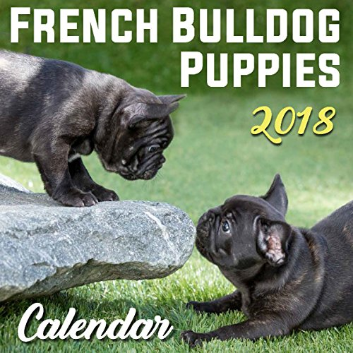 French Bulldog Puppies - 2018 Wall Calendar (Bulldog Puppies)