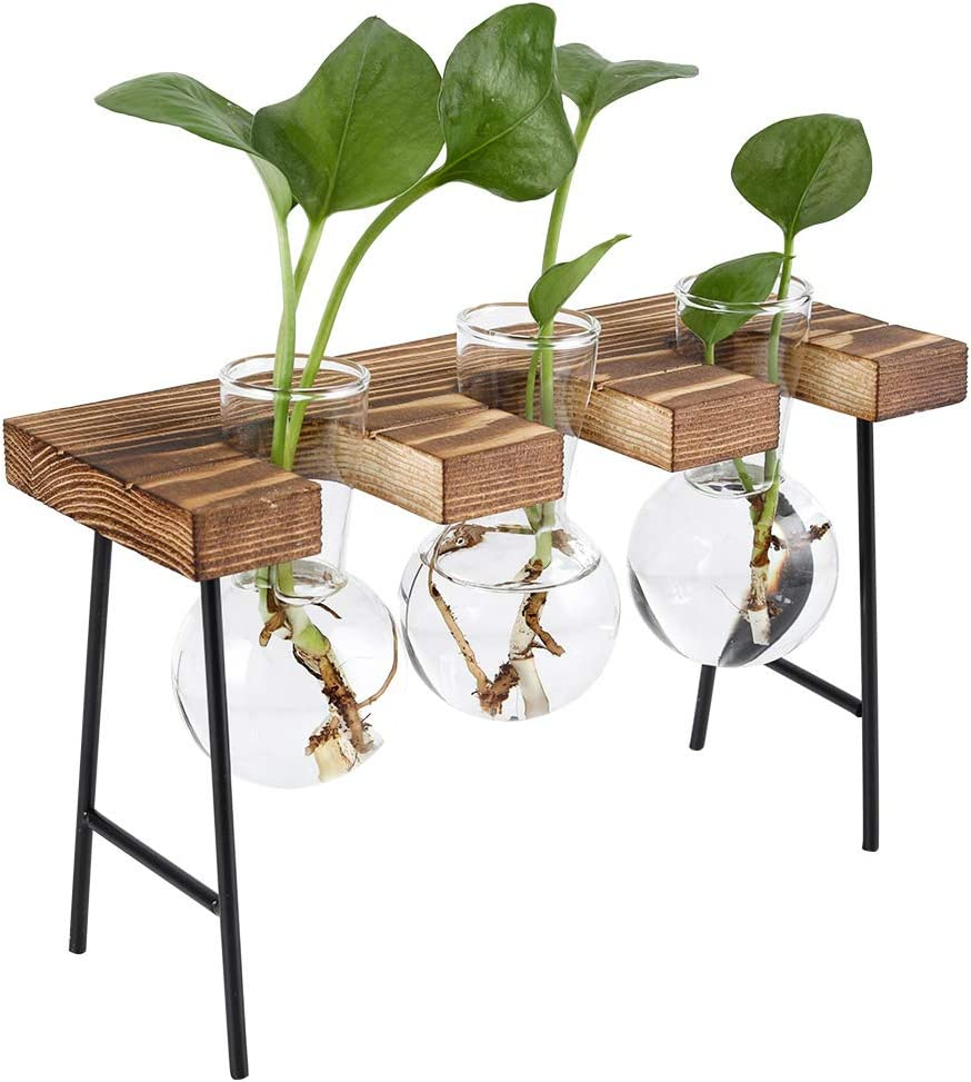 TQVAI Air Plant Terrarium Glass Vase(3 Bulb Vase) with Retro Wooden Mini Bench Stand Cute Air Planter Globe Orbs - Ideal for Home Office Decoration