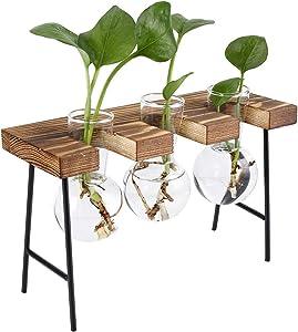 TQVAI Air Plant Terrarium Glass Vase(3 Bulb Vase) with Retro Wooden Mini Bench Stand Cute Air Planter Globe Orbs - Ideal for Home Office Decoration