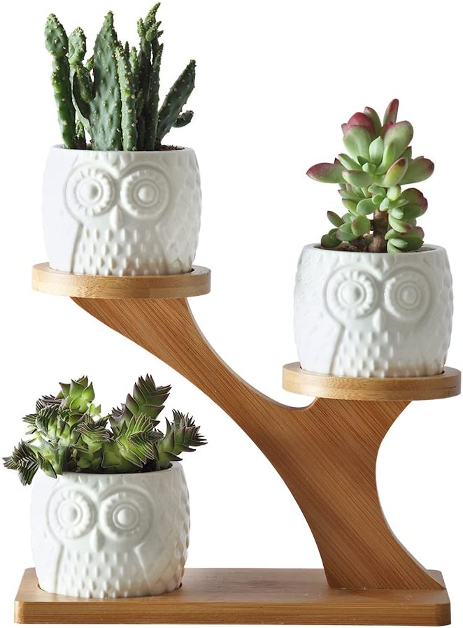 Owl Succulent Pots 3pcs with 3 Tier Bamboo Saucers Stand Holder Modern Decorative Ceramic Flower Planter Plant Pot with Drainage for Succulent Plants Small Cactus Herbs