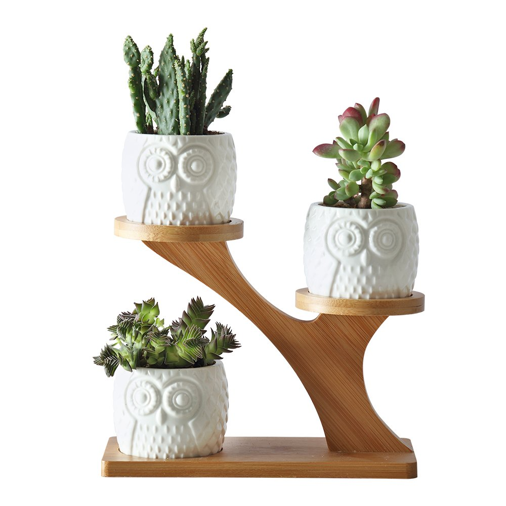 2.75 Inches Ceramic Modern Decorative Small Owl Pot with 3 Tier Bamboo Stand 3pcs Owl Pots with a Hole Planter Pot for Succulent Plants/Small Cactus/Herbs