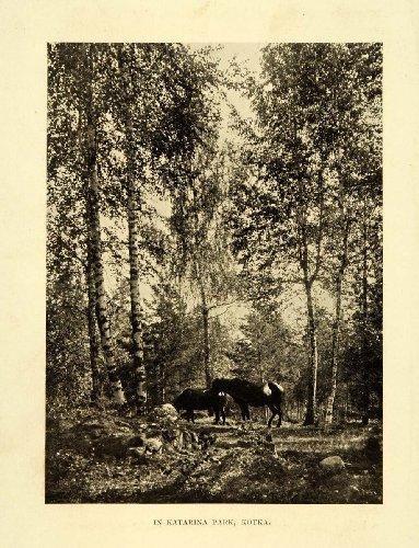 1911 Print Katarina Park Kotka Finland Horse Forest Suomi Equine Farm Animal - Original Halftone Print from PeriodPaper LLC-Collectible Original Print Archive