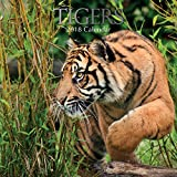 2018 Tigers Calendar - 12 x 12 Wall Calendar - With 210 Calendar Stickers