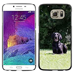 Hot Style Cell Phone PC Hard Case Cover // M00110537 German Short Hair Hunting Dog Black // Samsung Galaxy S6 (Not Fits S6 EDGE)