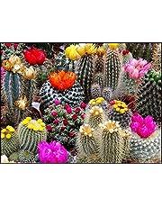 GL Seeds Cactus Cacti Succulent Barrel Mix Non GMO for Planting
