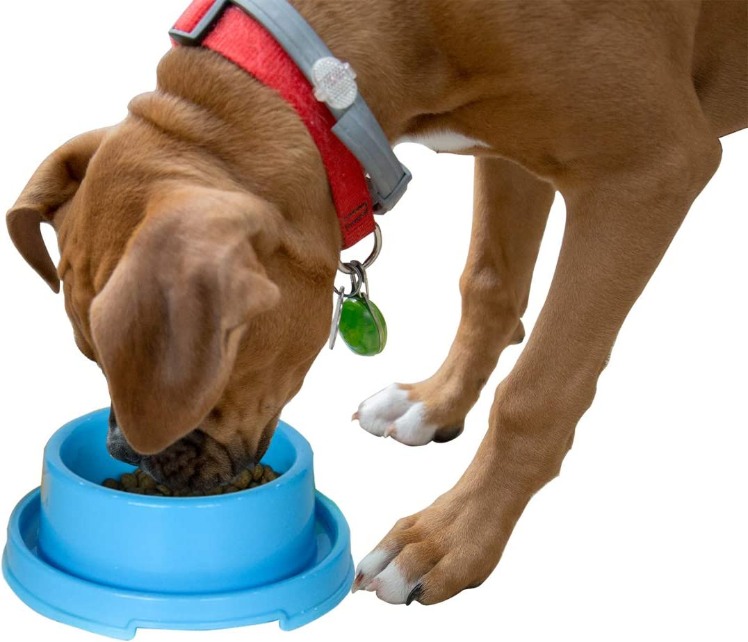 PetLike Dog Bowls Pet Food Bowls, No Spill Cat Bowl Anti Ant Bowl Water Food Feeder Pet Dish for Cat Puppies Small Dogs (1 Pack, Blue)