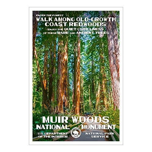 Muir Woods National Monument Poster - Original Artwork - 13