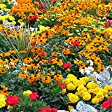 25 Heirloom Flower Seed Packets Including