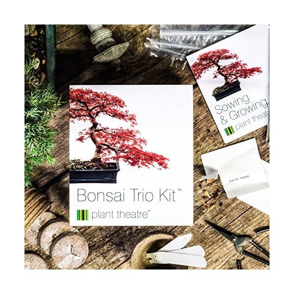 3 Distinctive Bonsai Trees To Grow Plant Theatre Bonsai Trio Kit Seeds Trees