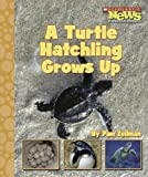A Turtle Hatchling Grows Up, Pam Zollman, 0516249487