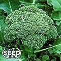 Calabrese Broccoli Seeds - 500 Seeds Non-GMO
